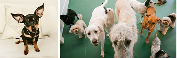 Lincoln Park Chicago Dog Boarding Doggie Daycare Spa Pooch Hotel