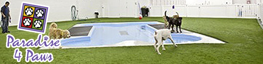 paradise 4 paws pet resort for dogs