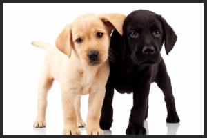 pooch hotel puppy daycare